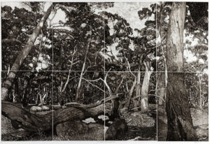 """The Tangled Wood (composition I)"" 2018 etching 80x120cm"