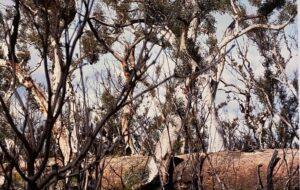 Contemporary Australian art, Corporate Art Consultant Melbourne, Art Lectures and Tours Albury Wodonga, Corporate Art Consultant Sydney, Artist Workshops Albury Wodonga, corporate art consultancy Sydney, Corporate art services Sydney, art for sale Australian artists Albury Wodonga, Corporate art Albury, Art Classes Albury Wodonga, Albury Wodonga venue hire, Art Gallery Albury Wodonga, Event space Albury Wodonga